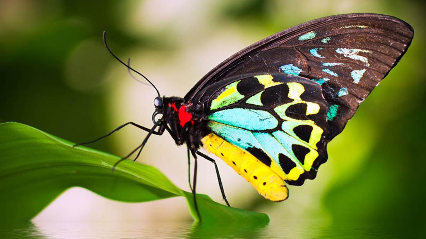 Wildlife Combo Cairns