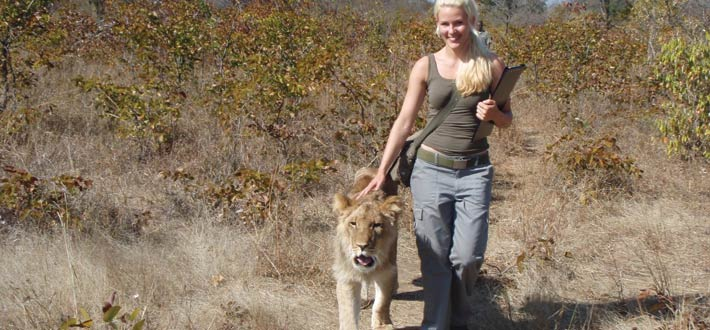 Zambia Lion Walk 2